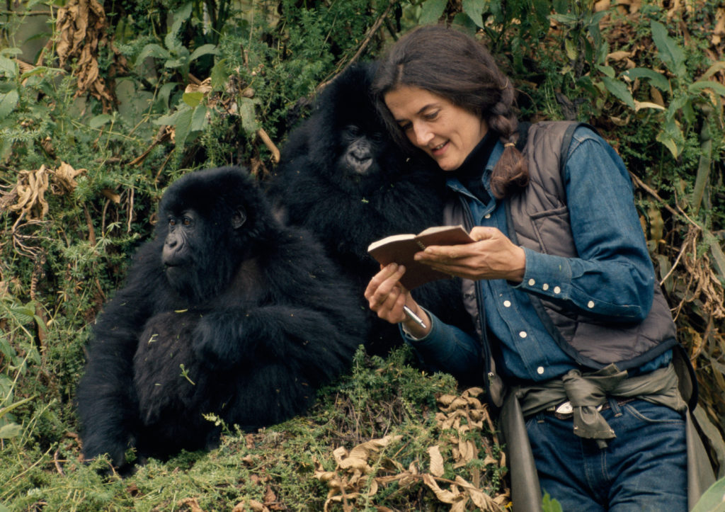 Dian Fossey in the wild with mountain gorillas. Photo by Robert I.M. Campbell