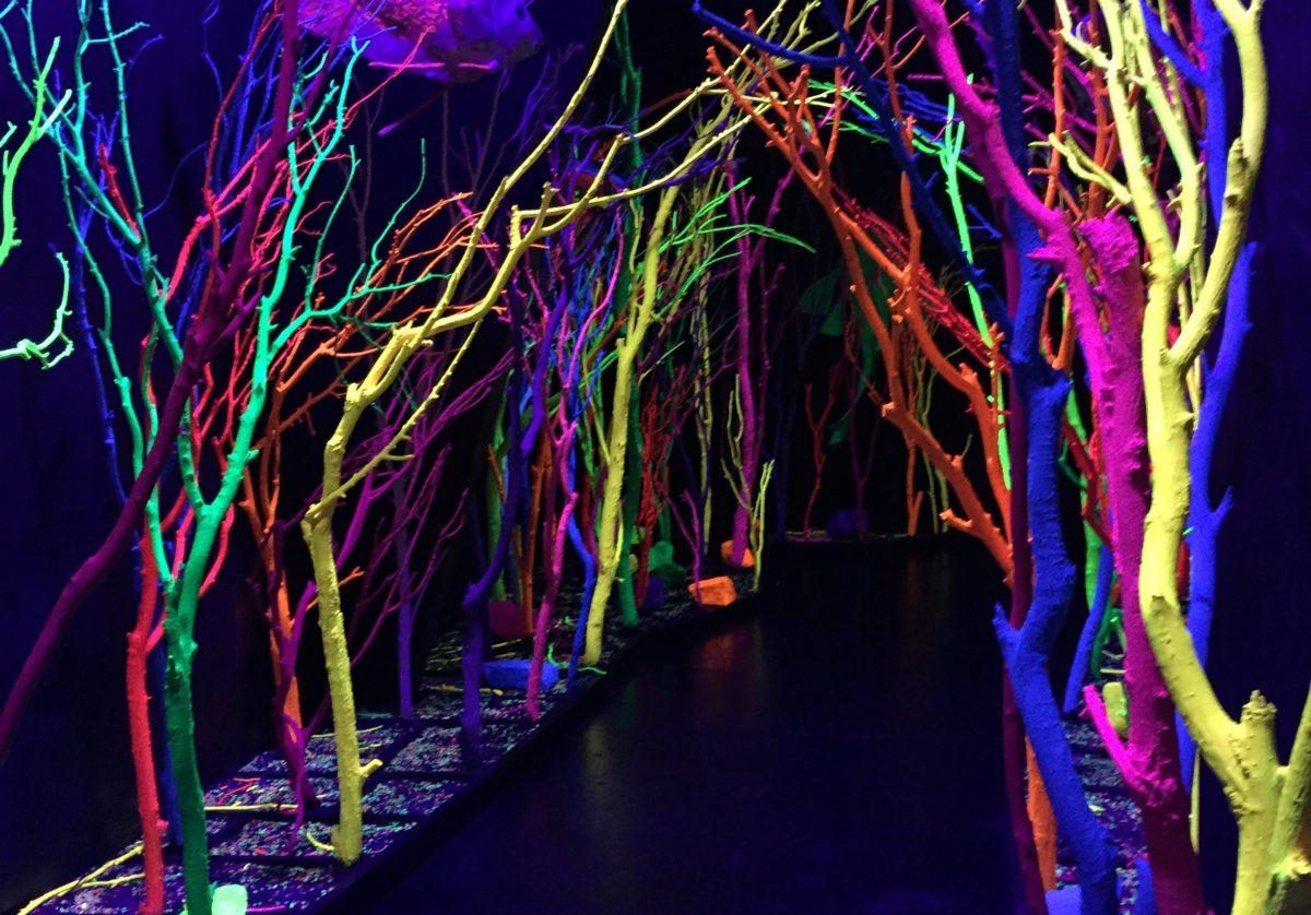 The arts collective Meow Wolf's immersive exhibition, The House of Eternal Return, has been a smash hit in New Mexico. Photo by Kathleen McCleery
