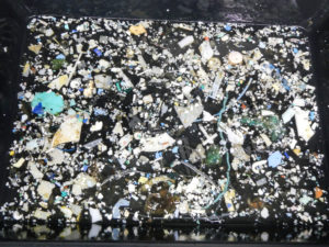 Plastic samples collected during The Ocean Cleanup's expedition in 2015. Photo by The Ocean Cleanup