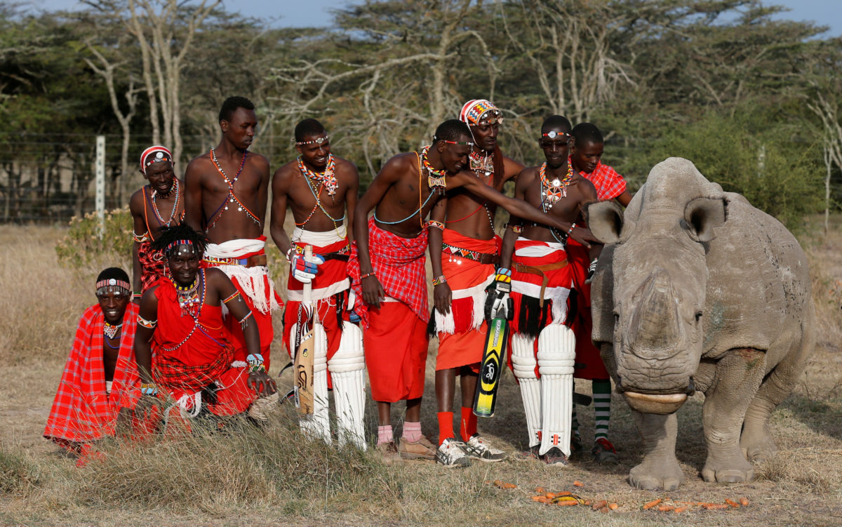 "Members of the Maasai Cricket Warriors pose for a photograph with the last surviving male northern white rhino named 'Sudan' after playing against the British Army Training Unit (BATUK) cricket team during a charity tournament called the ""Last Male Standing Rhino Cup"" at the Ol Pejeta Conservancy in Laikipia, Kenya June 18, 2017. Photo by Thomas Mukoya/REUTERS"