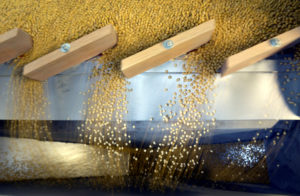 FILE PHOTO: Soybeans are sorted according to their weight and density on a gravity sorter machine in Fargo, North Dakota, U.S., December 6, 2017. REUTERS/Dan Koeck/File Photo - RC1158D124A0