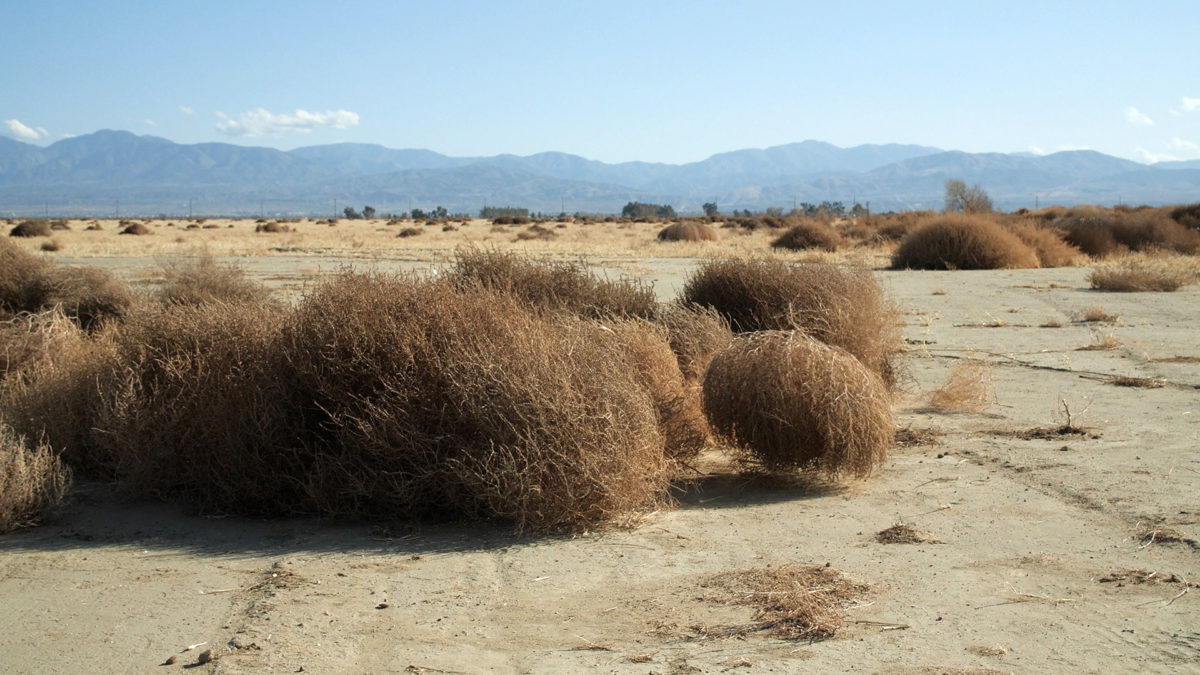 Why do tumbleweeds tumble? | PBS NewsHour