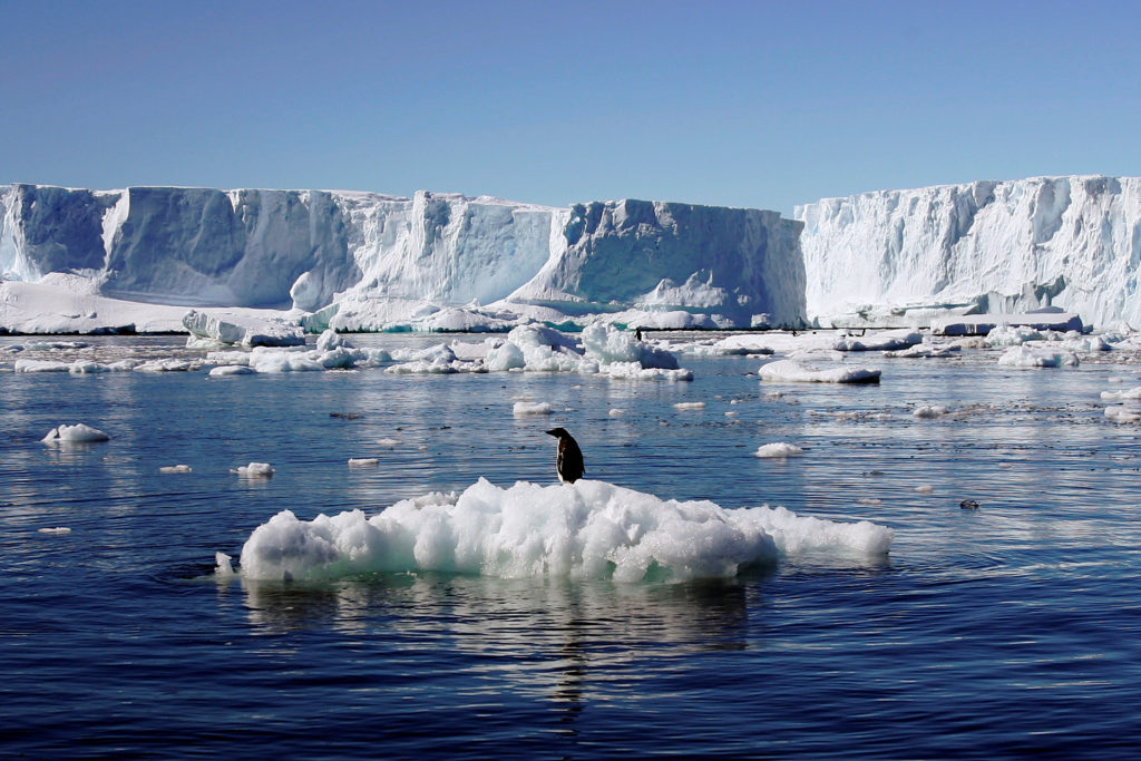 An Adelie penguin stands atop a block of melting ice near the French station at Dumont díUrville in East Antarctica January 23, 2010. Photo by REUTERS/Pauline Askin