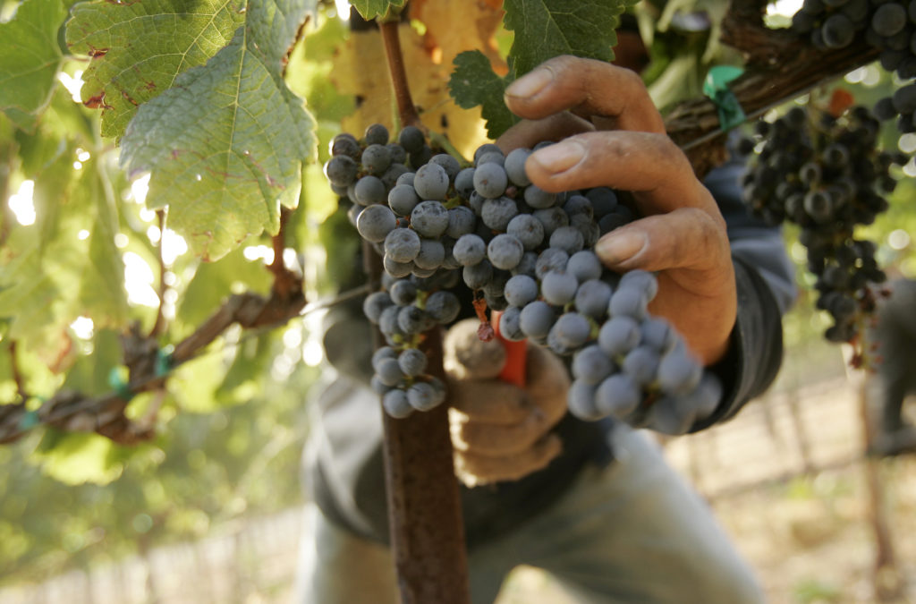 In the wake of the Fukushima nuclear plant disaster, cesium-137 made its way through the atmosphere to vineyards in Napa Valley. But the radiation levels measured in their wines are lower than naturally occurring radiation in your own body. Photo by REUTERS/Robert Galbraith