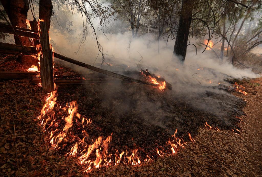 Underbrush burns on the south edge of the Carr Fire near Igo, California, U.S. July 29, 2018. REUTERS/Bob Strong - RC1508D660A0