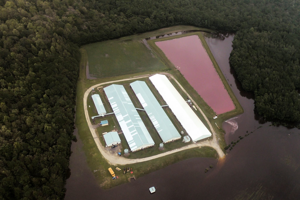 Aerial view of a hog farm after the passing of Hurricane Florence in eastern North Carolina on Sept. 17. Photo by Rodrigo ...