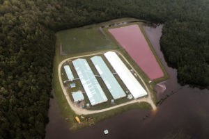 Aerial view of a hog farm after the passing of Hurricane Florence in eastern North Carolina on Sept. 17. Photo by Rodrigo Gutierrez/Reuters
