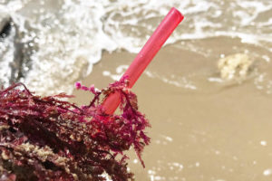 Loliware straws are made out of seaweed and are completely biodegradable. The company plans to release its line of straws in November. Photo courtesy: Loliware