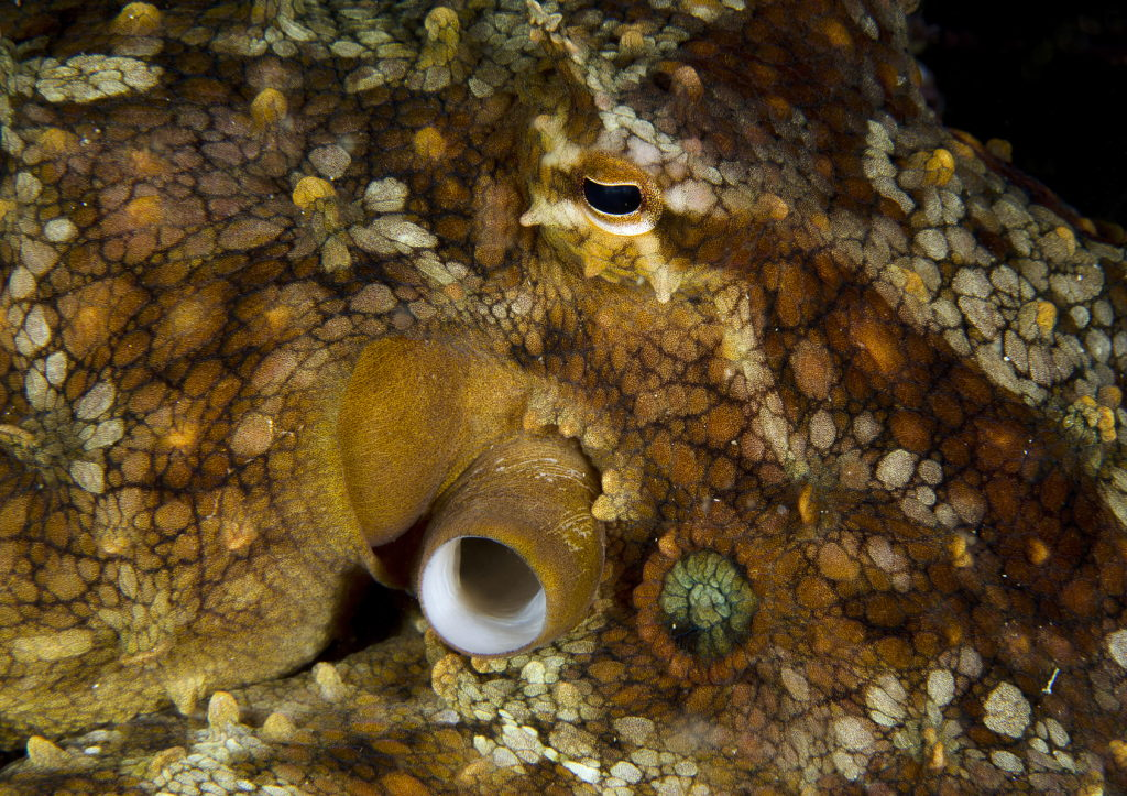 Party 'Pus: Ecstasy Makes Octopuses More Social