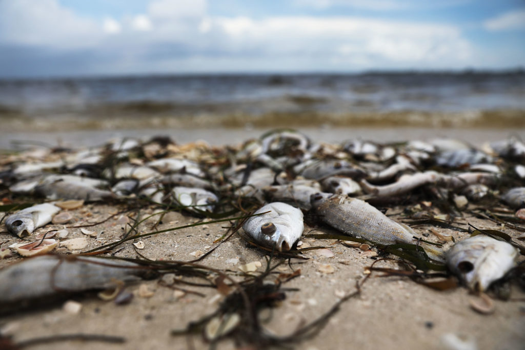Why Red Tide Isnt Red And Other Myths About Algae Blooms Pbs Newshour