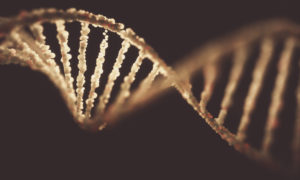 In the past, law enforcement could not match genetic profiles in their forensic databases with DNA records stored in ancestry sites. Photo by KTSDESIGN/SCIENCE PHOTO LIBRARY/via Getty Images