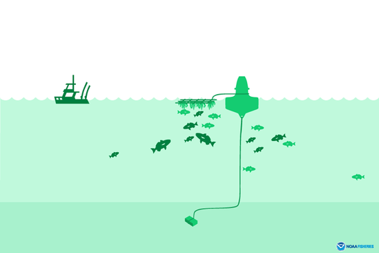 Fish-attracting devices can be anything from floating logs to specially-constructed buoys that draw in fish looking for food or shelter. Graphic by NOAA