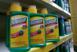Monsanto's Roundup weedkiller atomizers are displayed for sale at a garden shop near Brussels, Belgium. Photo by Yves Herman/Reuters