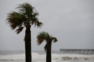 Palm trees are seen as Hurricane Michael approaches Panama City Beach, Florida. Photo by Jonathan Bachman/Reuters