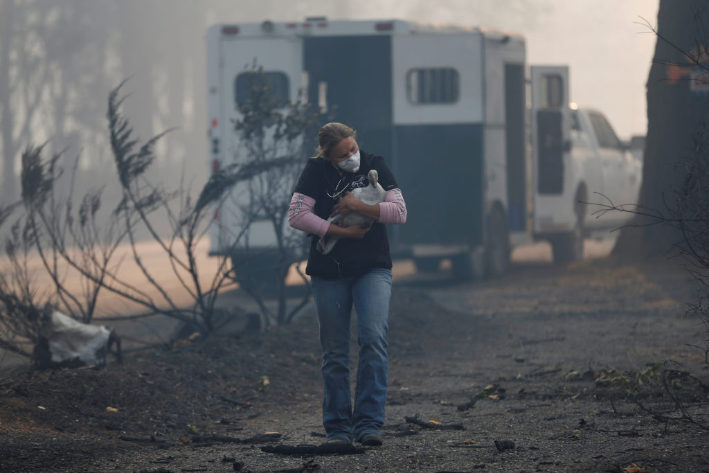 Equine veterinarian Jesse Jellison carries an injured goose to a waiting transport during the Camp Fire in Paradise, California, U.S. November 10, 2018. Photo by Stephen Lam/Reuters