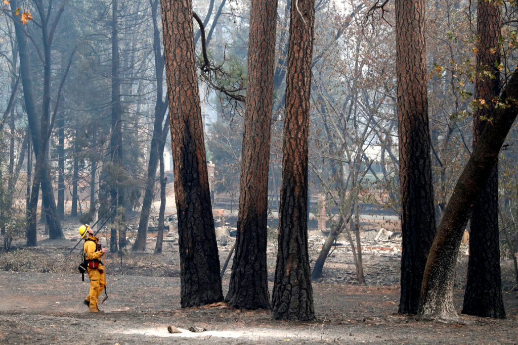 A firefighter examines trees damaged by the Camp Fire in Paradise, California. Photo by Terray Sylvester/Reuters