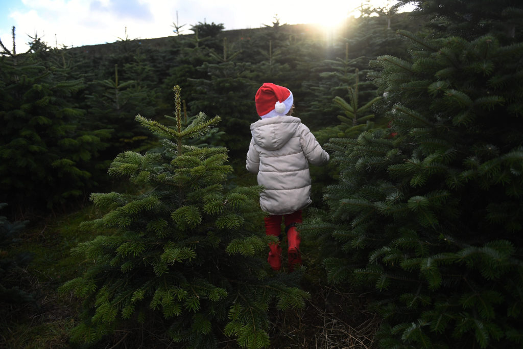 Images Of Christmas Trees.Why Are More And More Americans Buying Fake Christmas Trees
