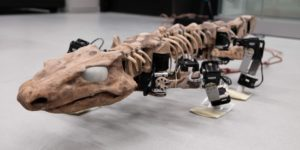 OroBOT, a robotic model made of 3D-printed parts and 28 individual motors, can demonstrate how Orobates might have walked 300 million years ago. Image courtesy of Tomislav Horvat and Kamilo Melo