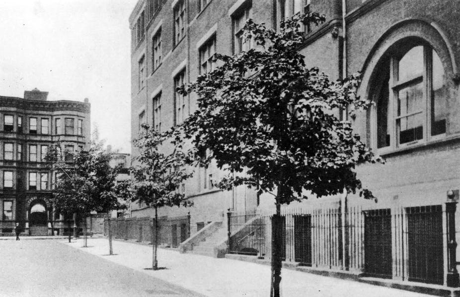 In 1919, 1,376 new Norway Maples were planted along streets in Brooklyn. Photo by Department of Parks of the Borough of Brooklyn, City of New York.
