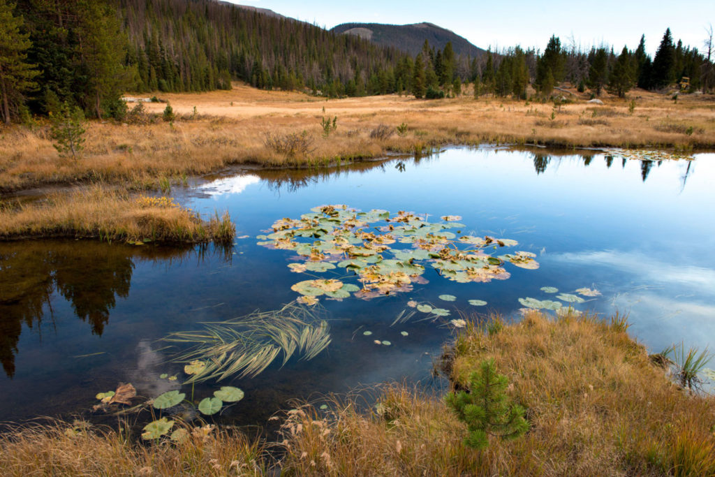 The headwaters of the Colorado River are in a marshy meadow in Rocky Mountain National Park. Photo by Ted Wood