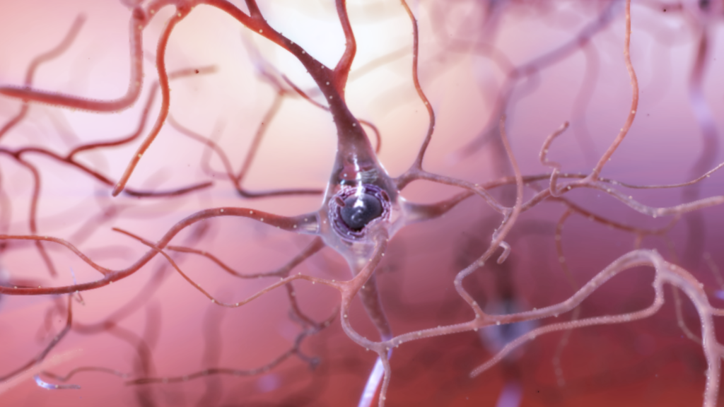 The human brain never stops growing neurons, a new study claims