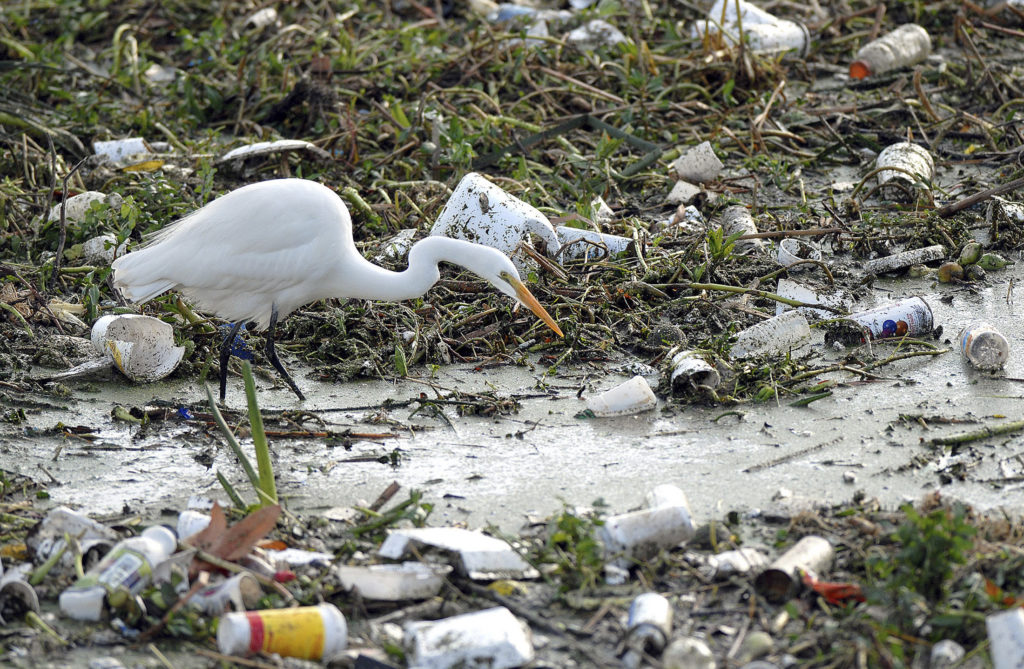 An egret searches for food among trash collected in the Los Angeles River after floods. Plastic trash can harm wildlife like birds, fish, turtles and whales. County of Los Angeles Department Public Works/Bob Riha, Jr.