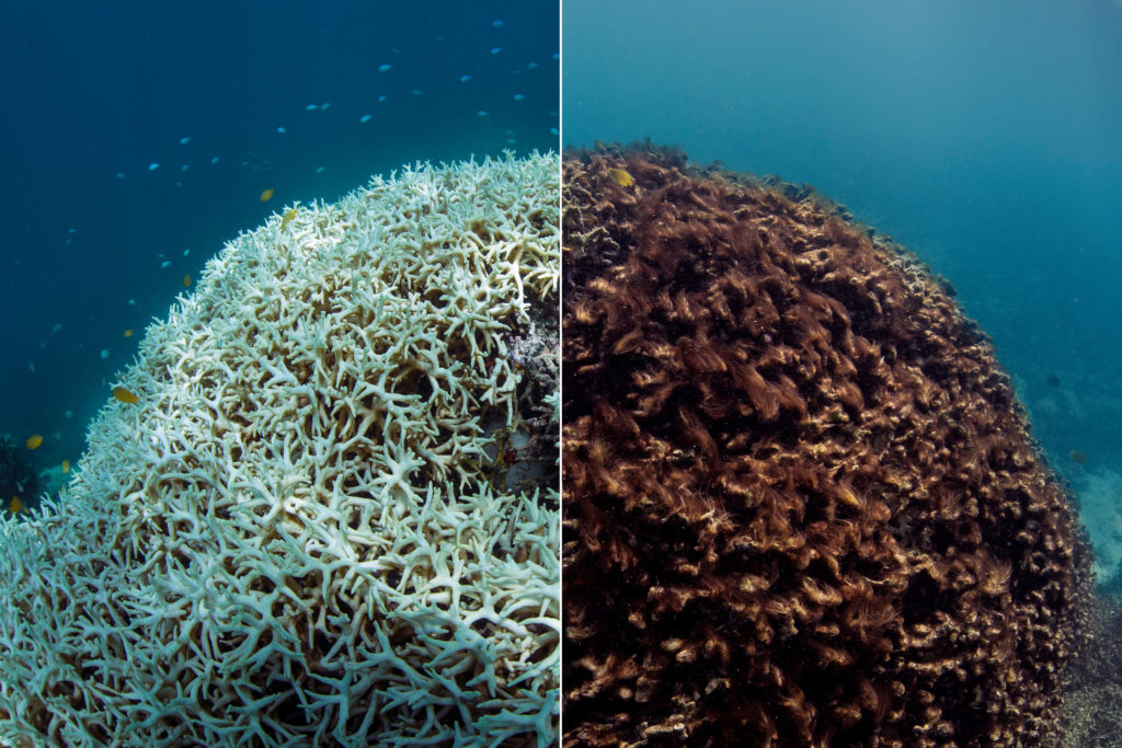 How global warming is permanently reshaping the Great Barrier Reef