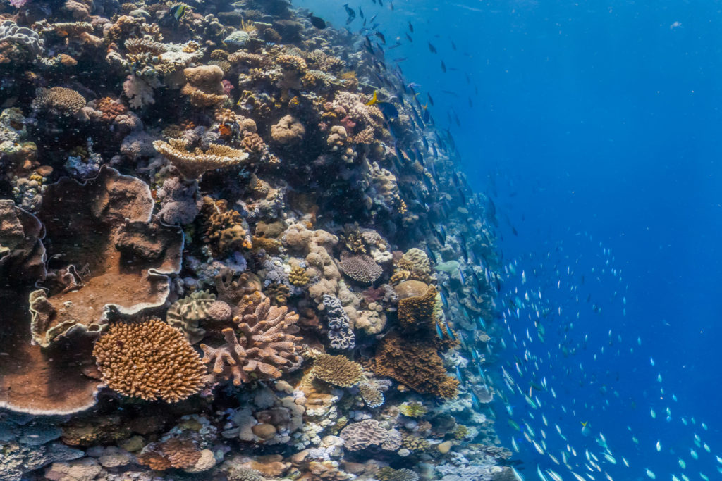 Warming seas wreck Great Barrier Reefs regrowth