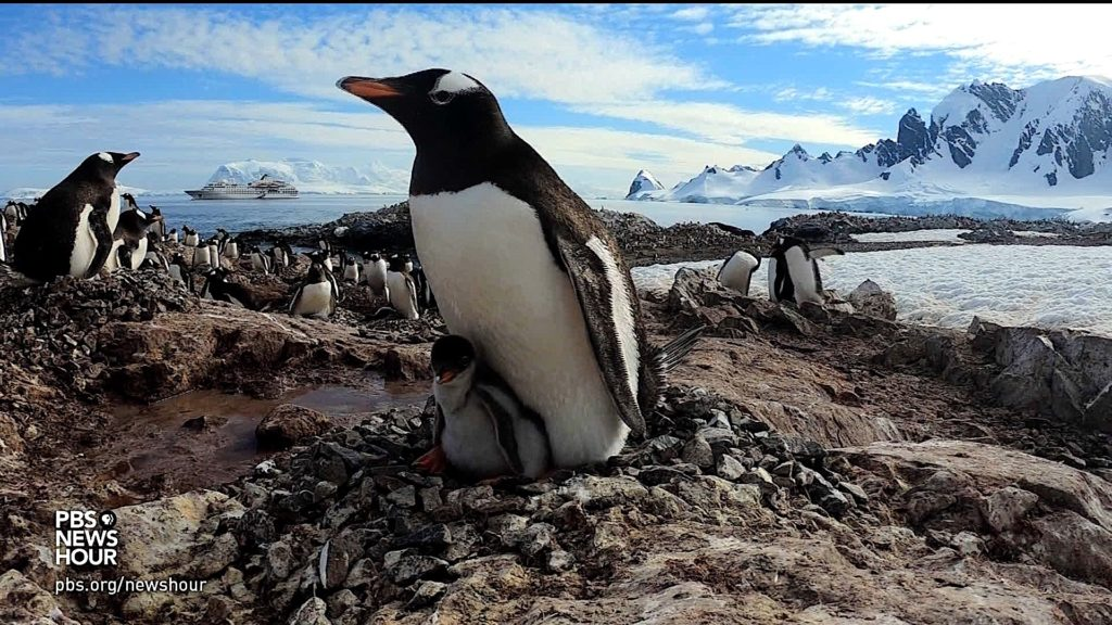 Antarctic penguins have existed for 60 million years. Can they survive climate change?