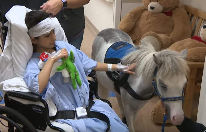 Small but mighty miniature horses offer therapy and hope