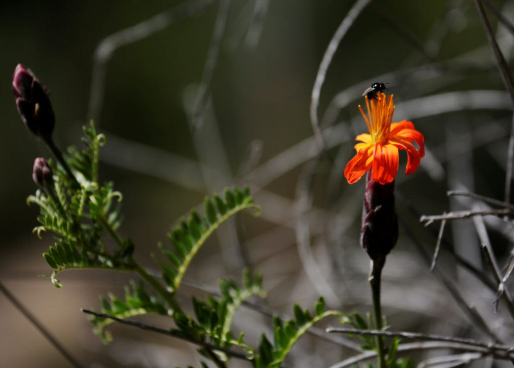 An insect on the flower is seen at the Auquisamana park on the outskirts of La Paz, Bolivia, on April 29, 2019. Photo by D...