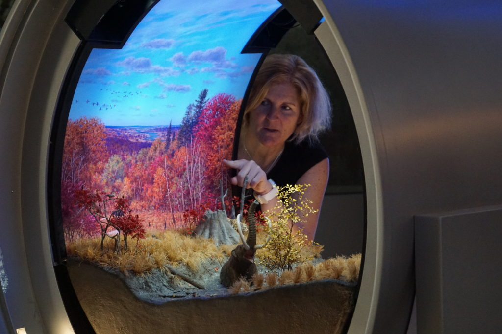 Project leader Siobhan Starrs points out the details in one of the new miniature dioramas that will give a glimpse of life on Earth thousands or millions of years ago. Image by Vicky Stein/NewsHour