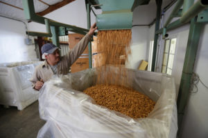 Carmelo Morillo fills a shipping container with almonds at Capay Canyon Ranch in Esparto, California, U.S. April 2, 2018. Photo by REUTERS/Elijah Nouvelage