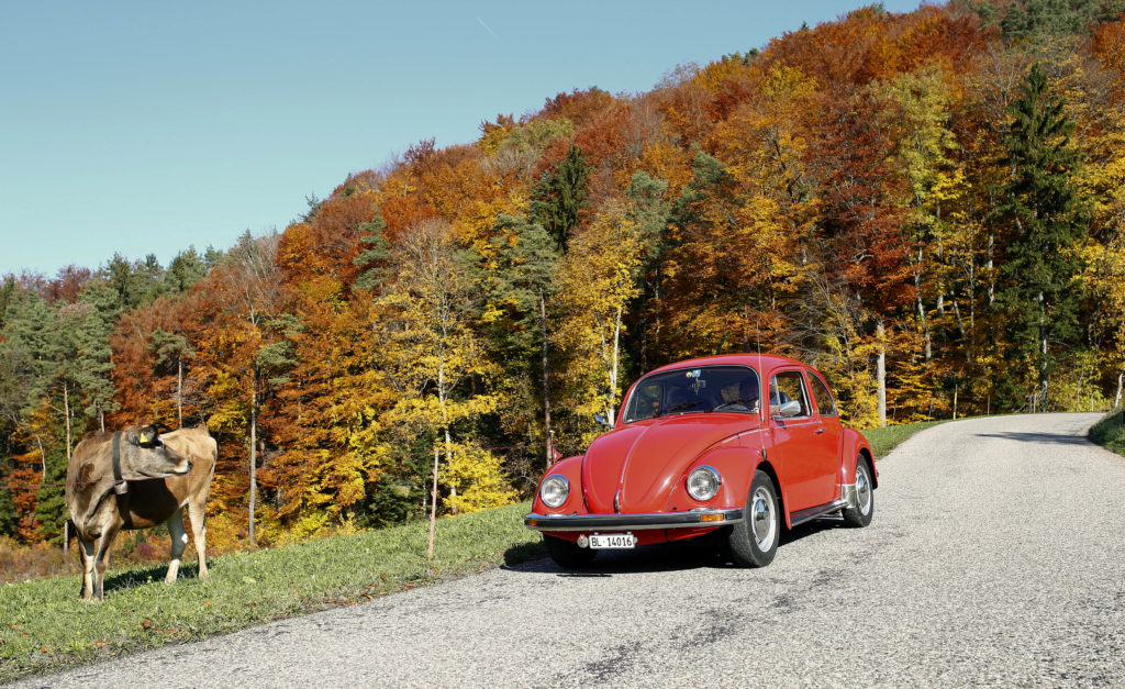 A cow stands on a road verge as a vintage Volkswagen Beetle drives through during a sunny autumn day near the village of Eptingen, Switzerland on October 27, 2015. Photo by Arnd Wiegmann/Reuters