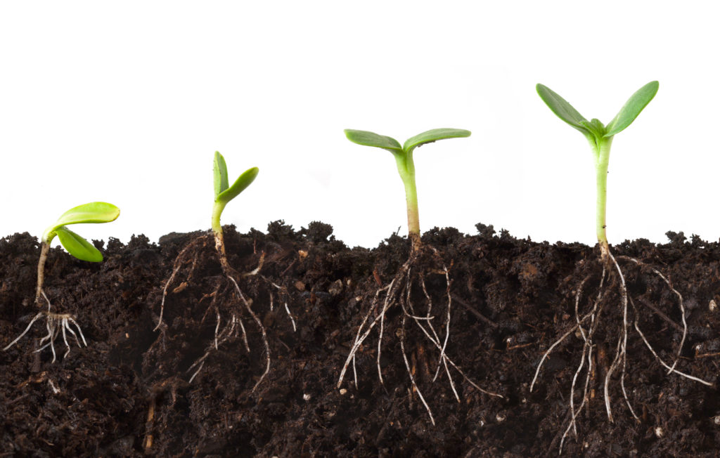 By making plant roots grow deeper, these geneticists hope to curb climate change