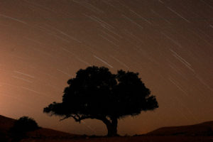 A long exposure shows stars behind a tree during the annual Perseid meteor shower near the town of Mitzpe Ramon, southern Israel, August 13, 2019. Photo by: Amir Cohen/Reuters