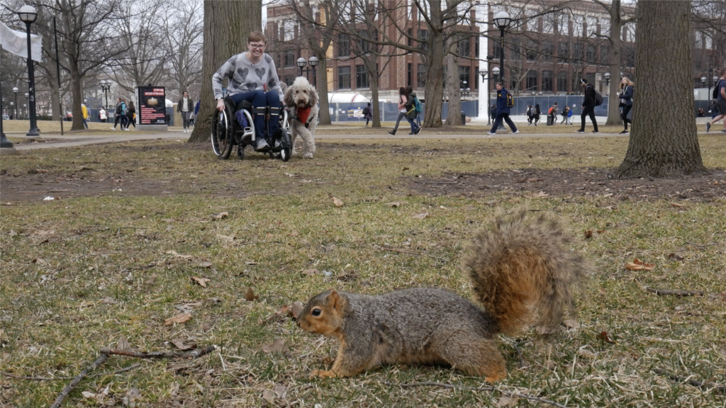 Devitz uses a wheelchair to navigate parks and urban environments while researching squirrels. For her, that's an accessible research environment. Image by Sean Moore/University of Michigan News