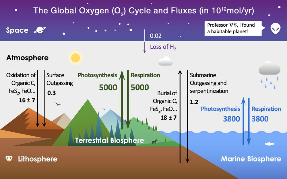 There are four main reservoirs of oxygen on Earth: the terrestrial biosphere (green), marine biosphere (blue), lithosphere (Earth's crust, brown), and atmosphere (grey). Colored arrows show fluxes between these reservoirs. Burial of organic material causes a net increase in atmospheric oxygen, and reactions with minerals in rocks cause a net decrease. Chart by Pengxiao Xu/Wikimedia, CC BY-SA