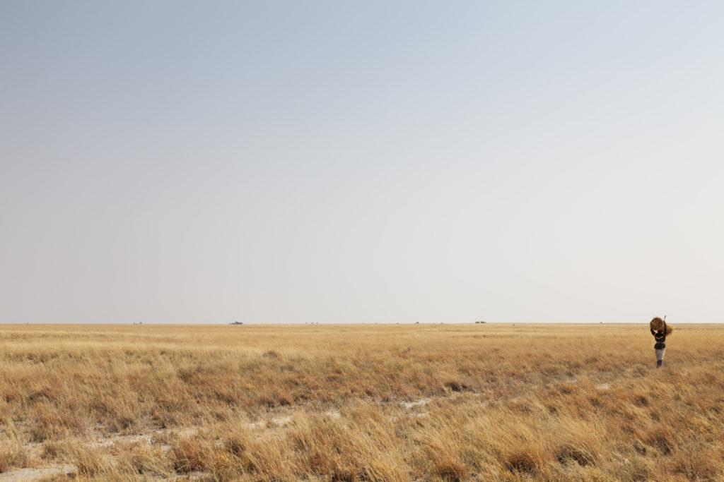 African woman carrying hay on her head in Makgadikgadi Pan National…