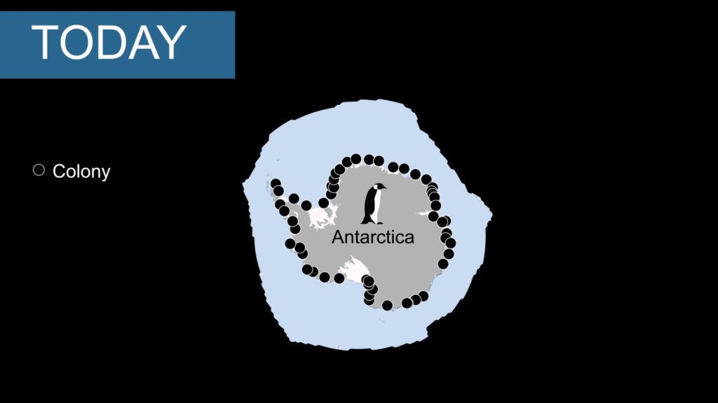 54 known Emperor Penguin colonies around Antarctica (black dots) and sea ice cover (blue color). Image by Stephanie Jenouvrier