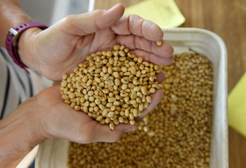 Vanessa Kummer checks the quality of their 2018 soybean crops on the family farm near Colfax, North Dakota, U.S., August 6...