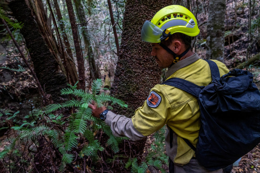A member of the specialist team of remote-area firefighters and par…