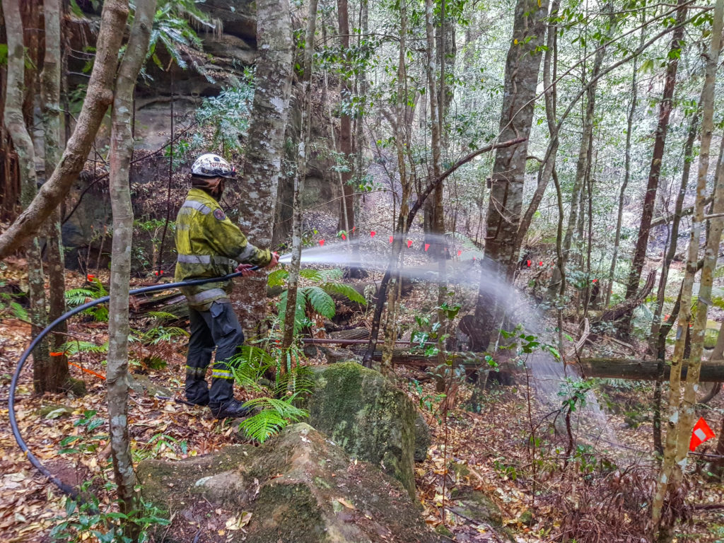 A member of the specialist team of remote-area firefighters and parks staff sprays water on an area with endangered Wollemi Pines to protect them from bushfires at Wollemi National Park, New South Wales, Australia mid-January 2020. NSW NPWS/Handout via Reuters