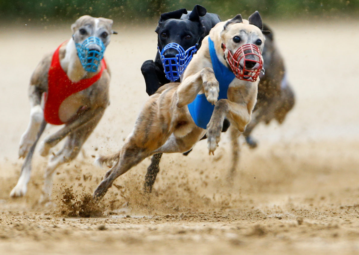 Greyhound racing betting games for kentucky msw betting rules in texas