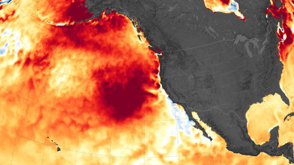 Marine heat wave 'blobs' are becoming more severe as oceans warm