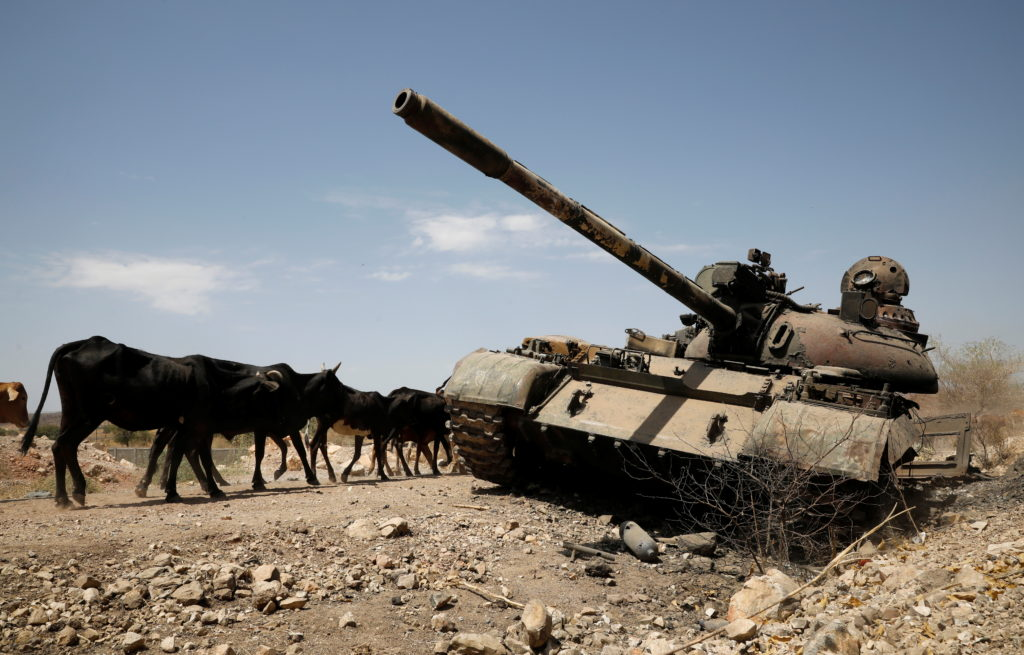 Cows walk past a tank damaged in fighting between Ethiopian government and Tigray forces, near the town of Humera