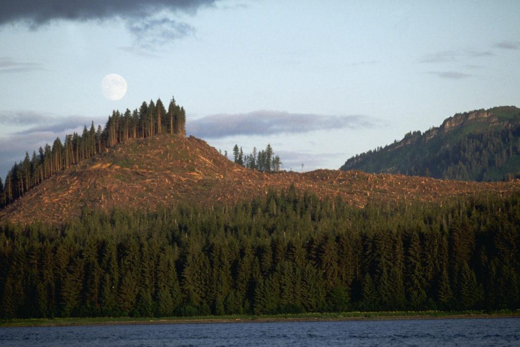 Biden ends large-scale logging on huge Alaska rainforest