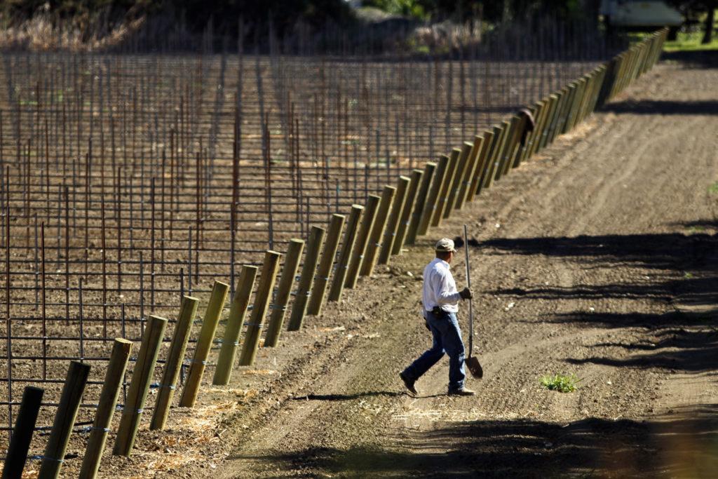 A farmer works a field in the Sacramento San Joaquin River Delta near Walnut Grove, California