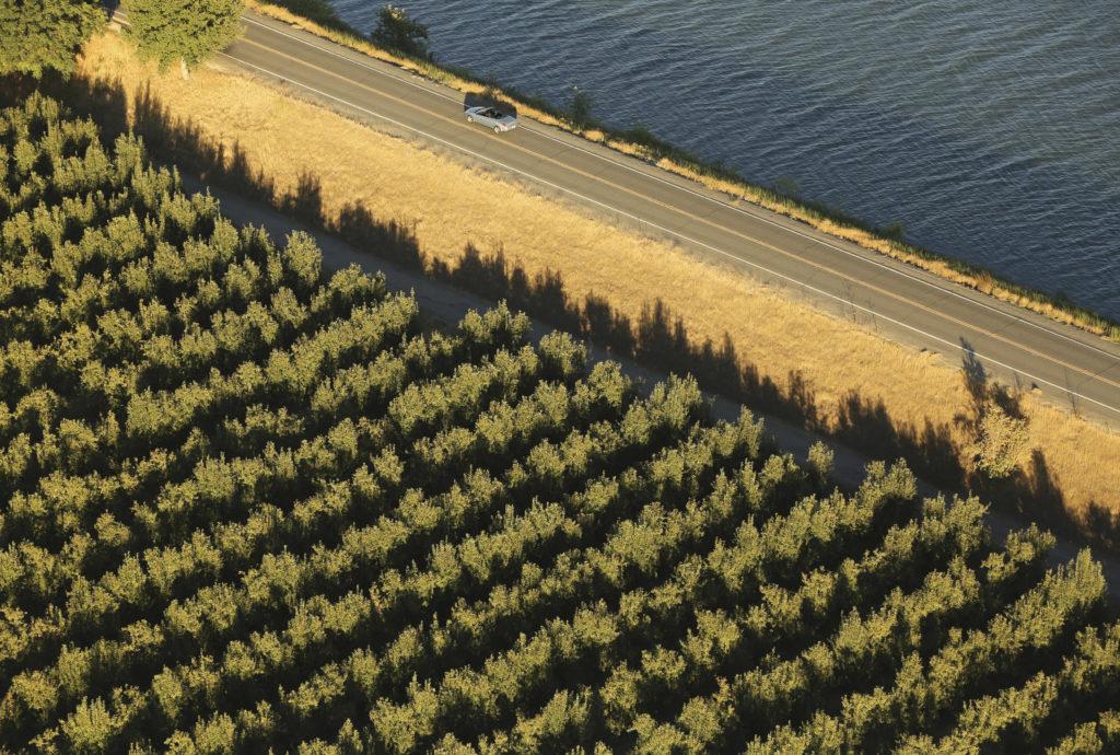 A vineyard and levee road are shown in the Sacramento San Joaquin River Delta near Walnut Grove, California