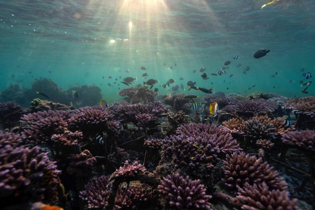 Fish swim at a coral reef garden in Nusa Dua, Bali